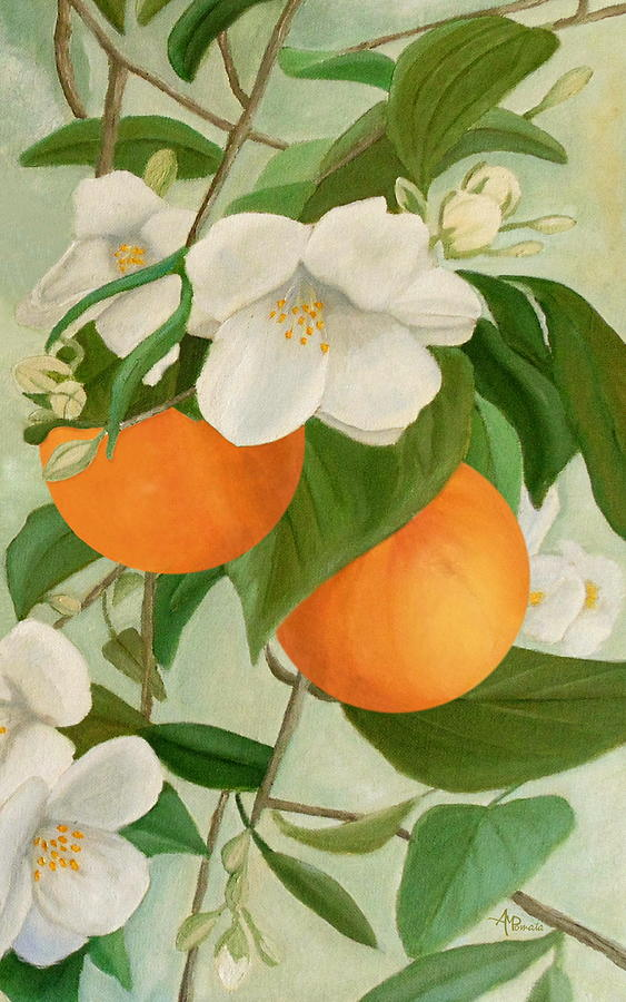 Branch Of Orange Tree In Bloom Painting by Angeles M Pomata