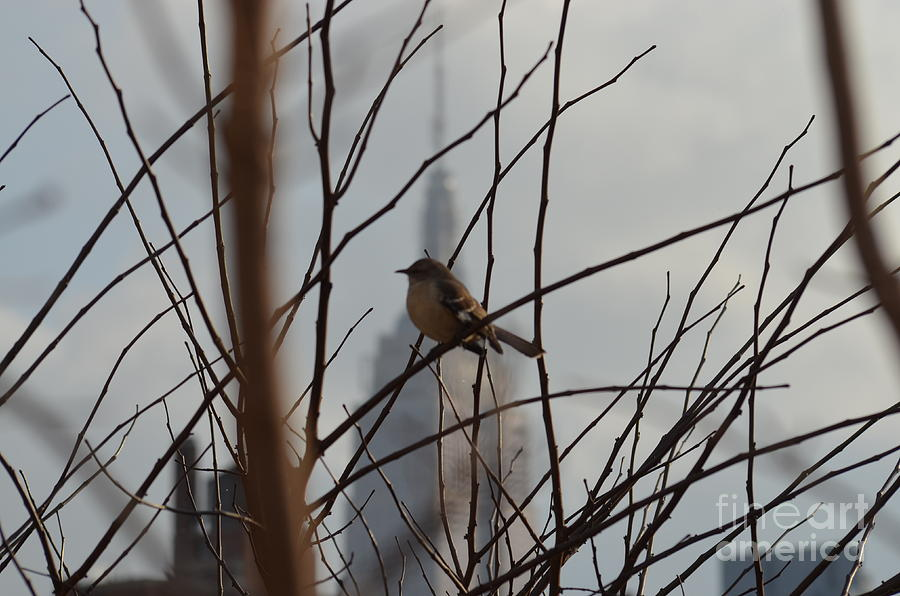 Bird Photograph - Branch With A View by Des Brownlie