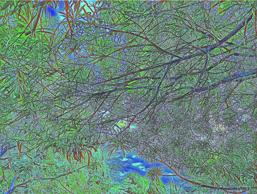 Branches And Sky Digital Art by Teresa Prevey