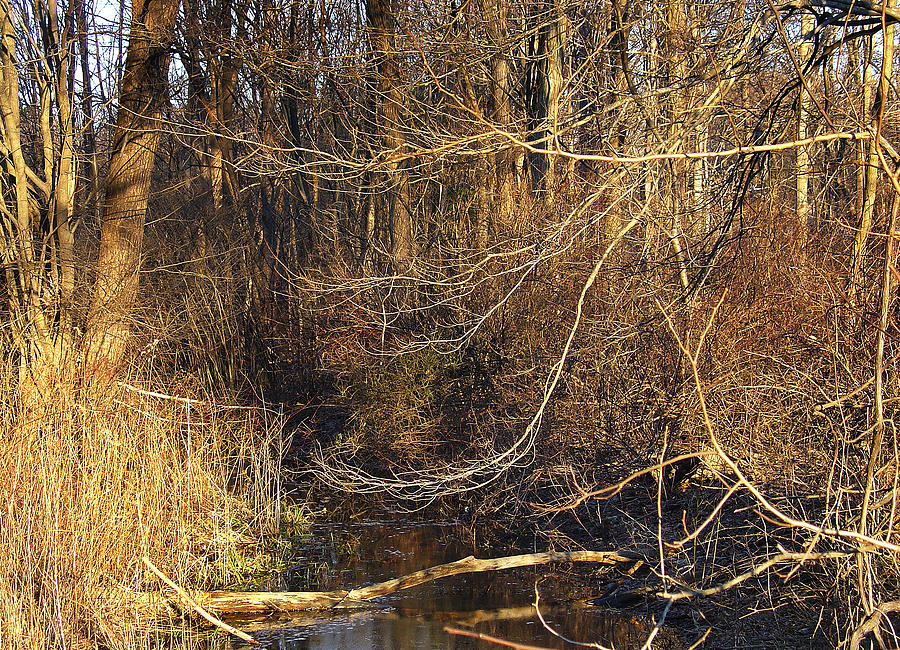 Palenville Photograph - Branches Are Natures Strings Dancing To The Rhythm Of The Wind by Terrance DePietro
