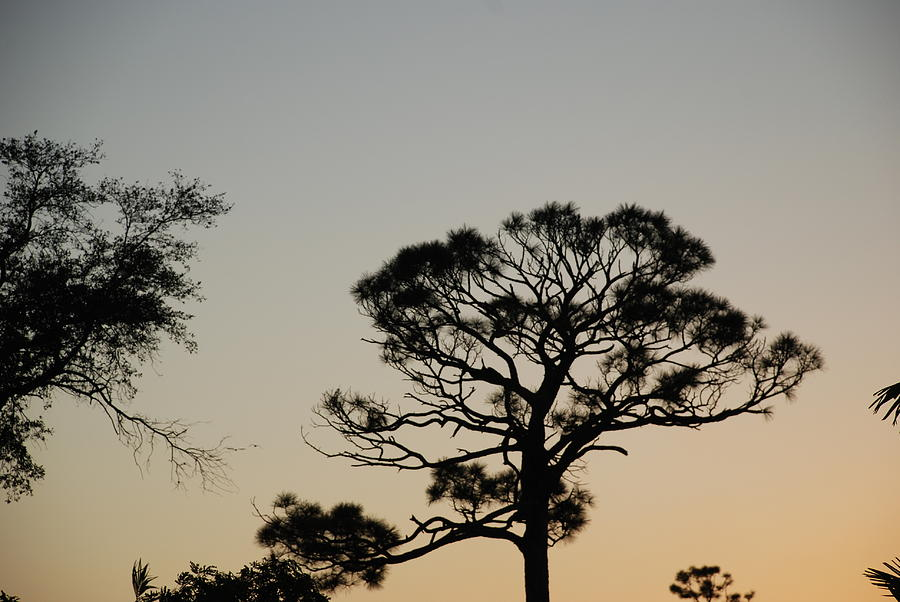Tree Photograph - Branches In The Sunset by Rob Hans