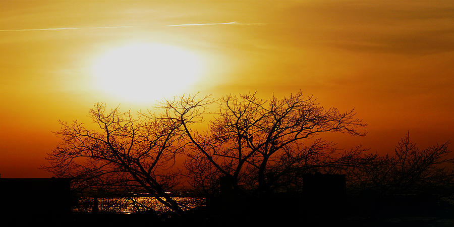 Landscape Photograph - Branches by Kendall Eutemey