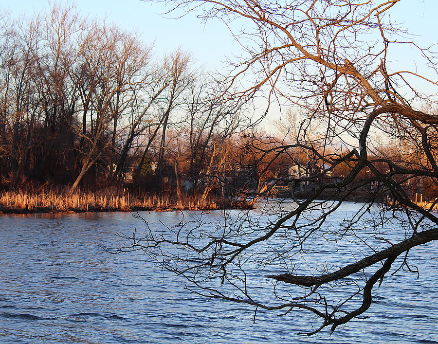 Branches Over Water by Melinda Blackman