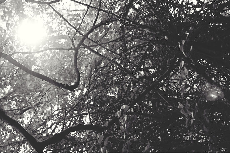 Lapeer Photograph - Branches by Sarah Boyd