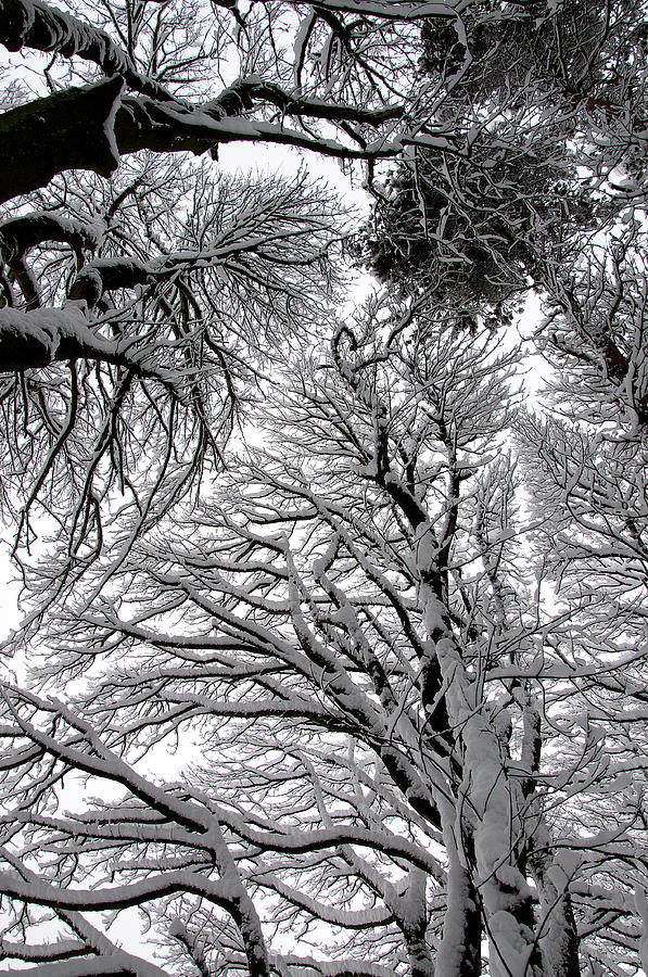 Trees Photograph - Branches With Snow by Mark Denham