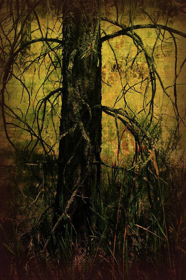 Mixed Media Photograph - Branching Out by Bonnie Bruno