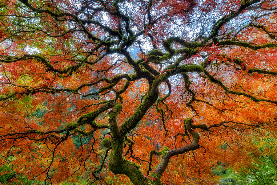 Portland Photograph - Branching Out in Autumn by David Gn