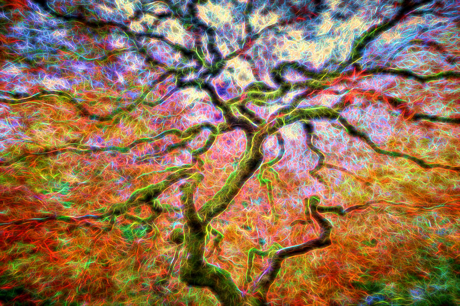 Portland Photograph - Branching Out in Autumn Neon by David Gn
