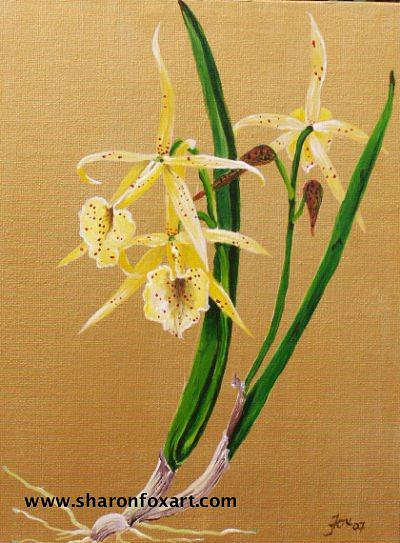 Floral Painting - Brassalova Orchid by Sharon Fox-Mould