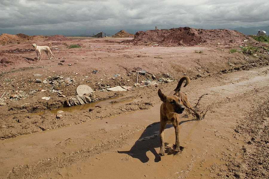 Wild Dogs Photograph - Brazilian Stray Dogs by Colleen Joy