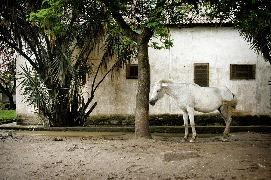 Brazil Photograph - Brazilian Stray Horse by Colleen Joy