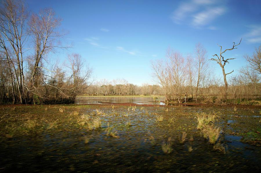 Texas Photograph - Brazos Bend Winter Wetland by Katrina Lau