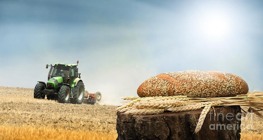 Agriculture Photograph - Bread And Wheat Cereal Crops.traktor On The Background by Deyan Georgiev