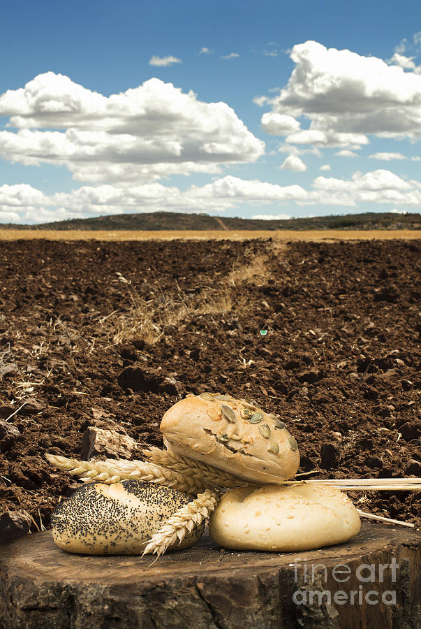 Agriculture Photograph - Bread And Wheat Ears. Plowed Land by Deyan Georgiev