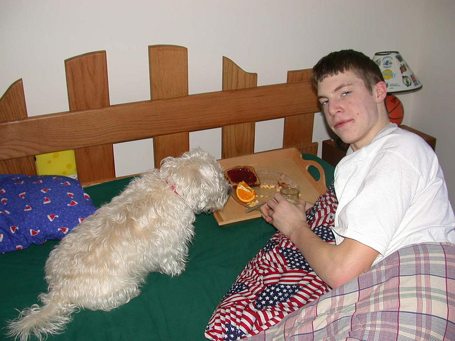 Dogs Photograph - Breakfast In Bed by G Teysen