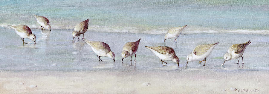 Breakfast on the Beach, Snowy Plover Sandpipers, Siesta Key, wide-narrow by Shawn McLoughlin