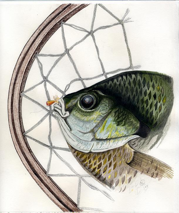 Bream Drawing - Bream And Net by H C Denney