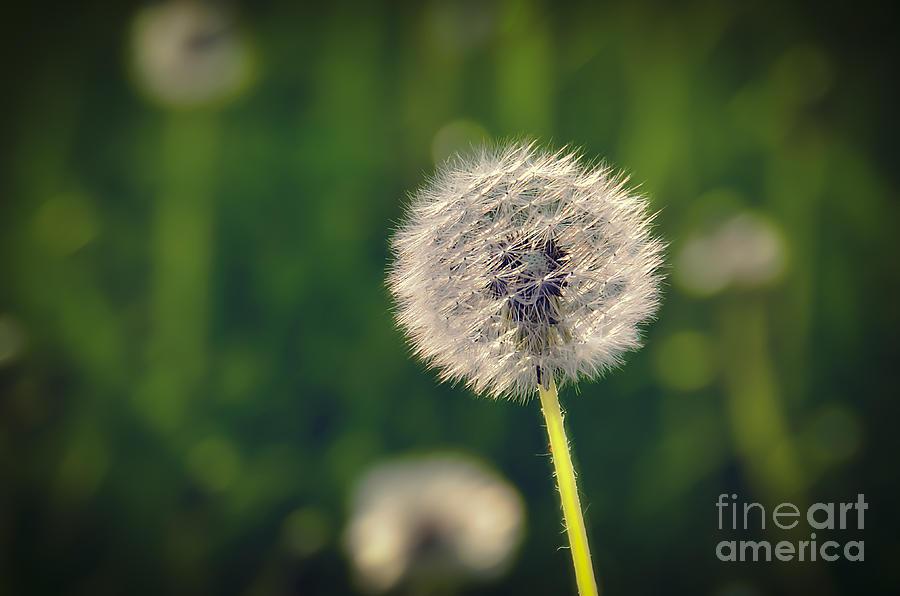 Fiori Photograph - Breath by Alessandro Giorgi Art Photography