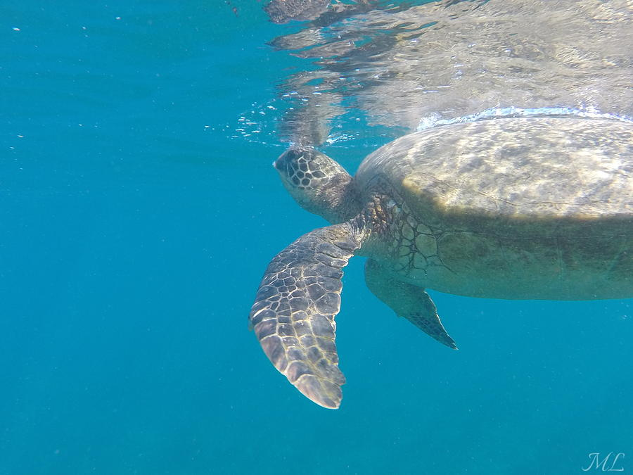 Turtle Photograph - Breath Of A Honu by Melissa Llerena