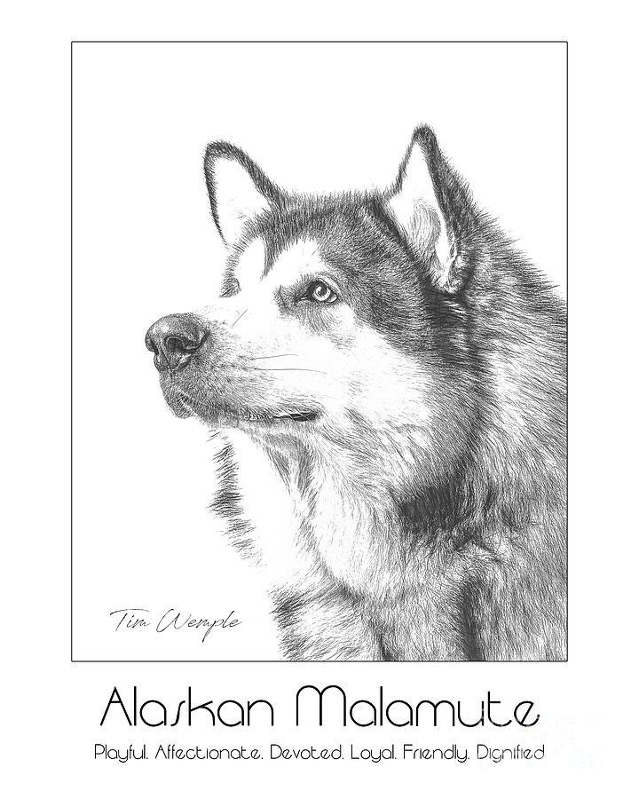 Poster Digital Art - Breed Poster Alaskan Malamute by Tim Wemple