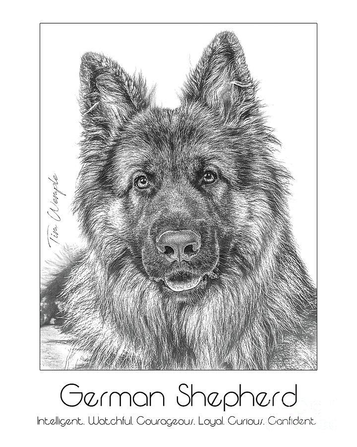 Poster Digital Art - Breed Poster German Shepherd by Tim Wemple