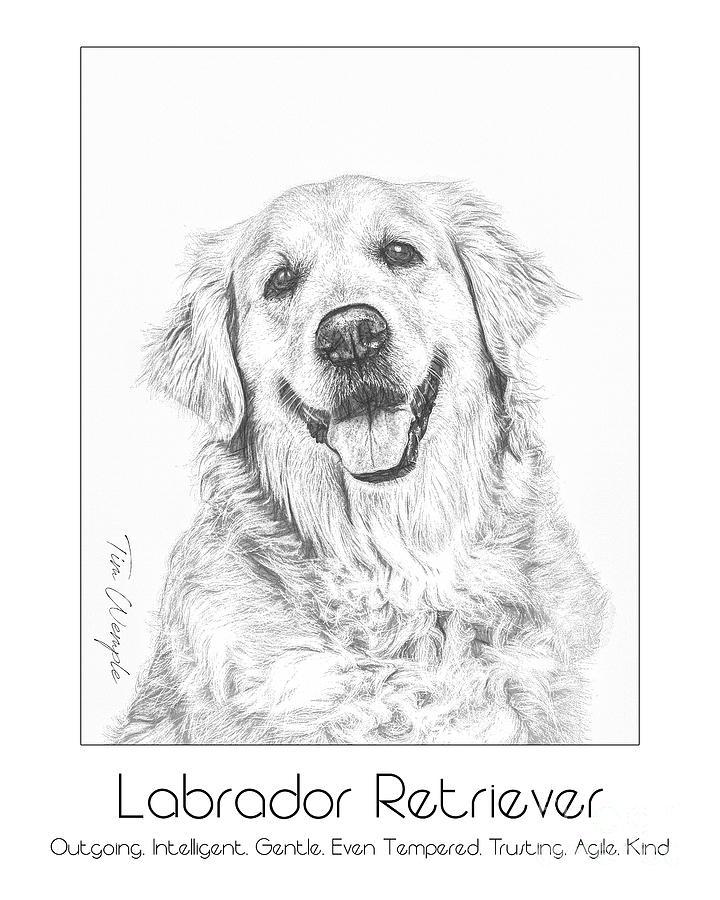 Poster Digital Art - Breed Poster Labrador Retriever by Tim Wemple