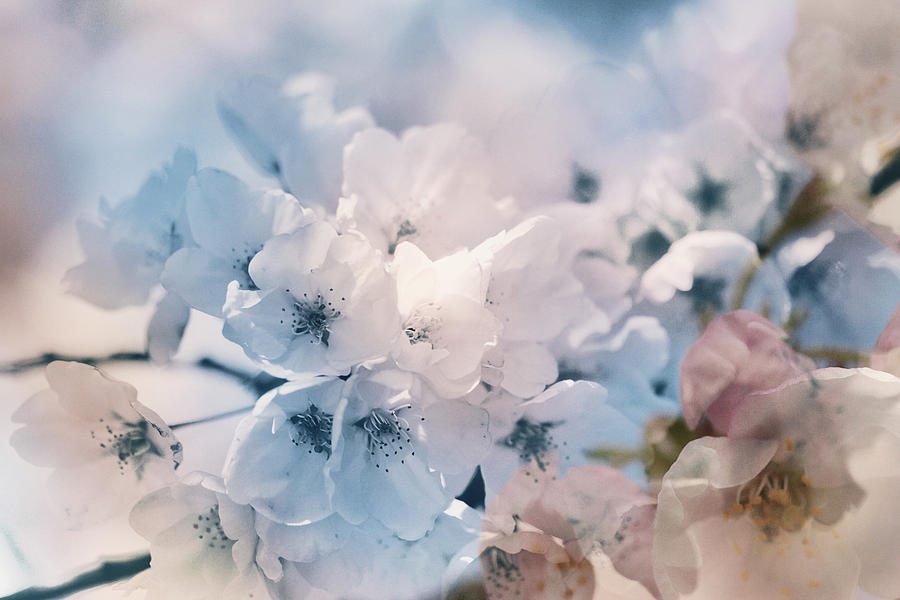 Breeze Of Blossoms by Connie Handscomb