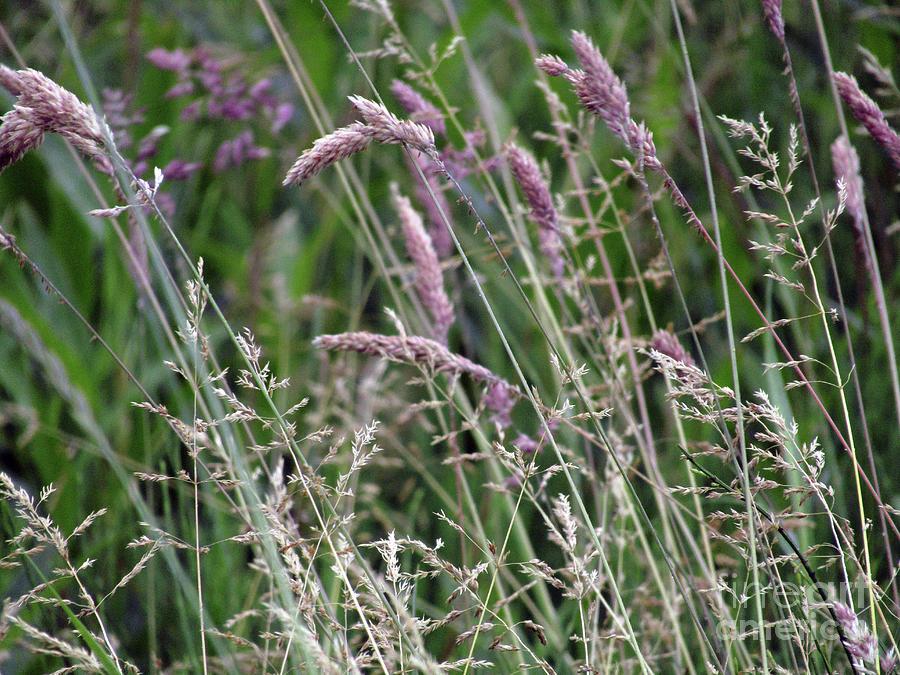 Grass Photograph - Breezy Summer 3 by Kim Tran
