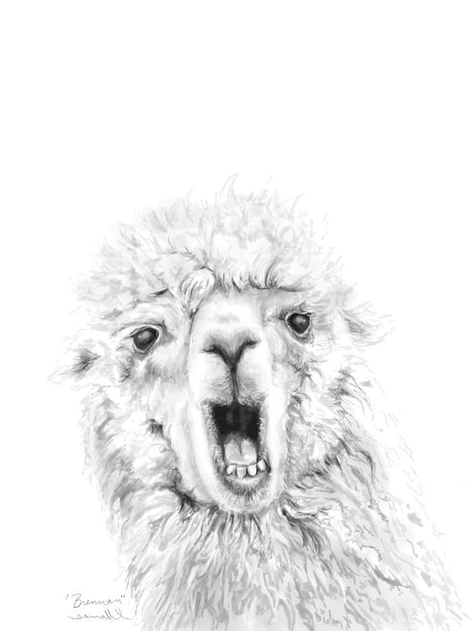 Llamas Drawing - Brennan by K Llamas