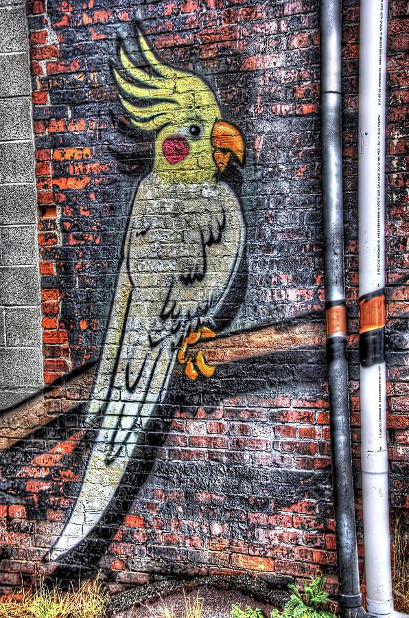 Bird Photograph - Brick Cockatiel by Kenneth Campbell
