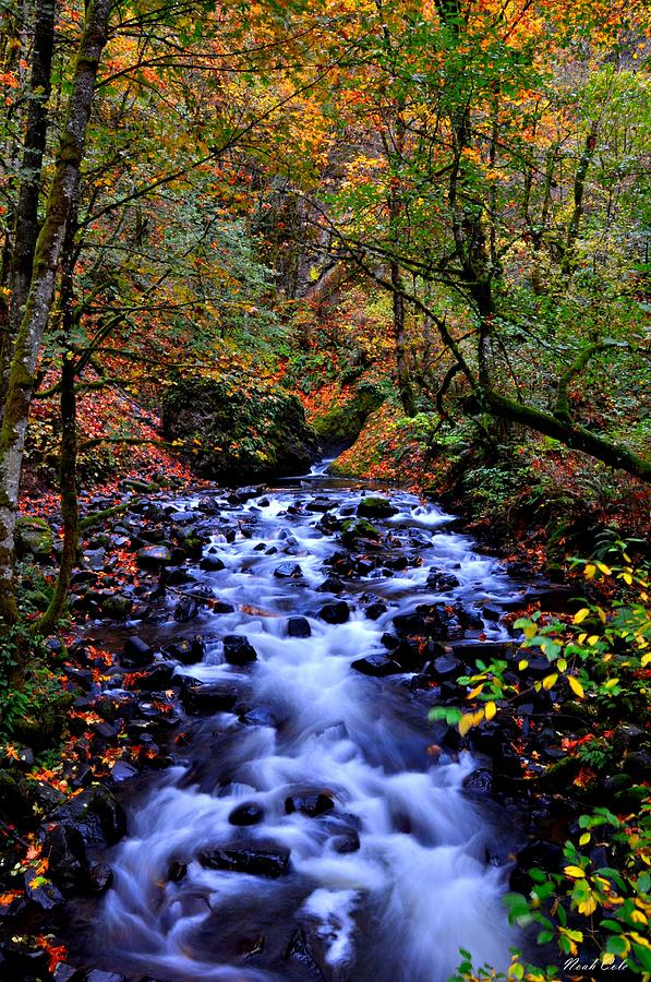 Stream Photograph - Bridal Veil Creek by Noah Cole