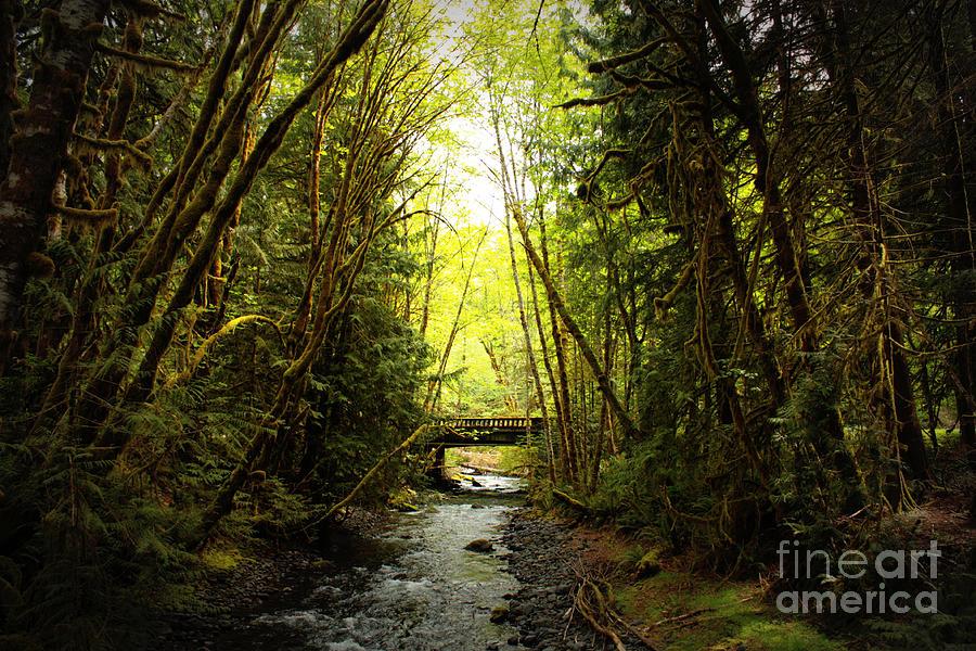 Rainforest Photograph - Bridge In The Rainforest by Carol Groenen