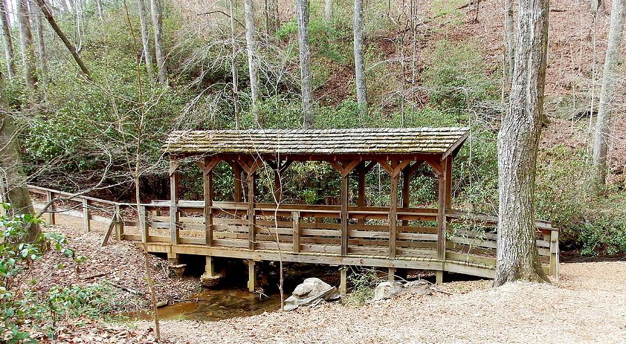Bridge In The Woods Photograph
