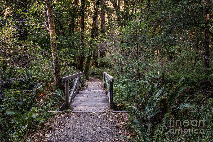Bridge On Leiffer Trail 2 by Al Andersen