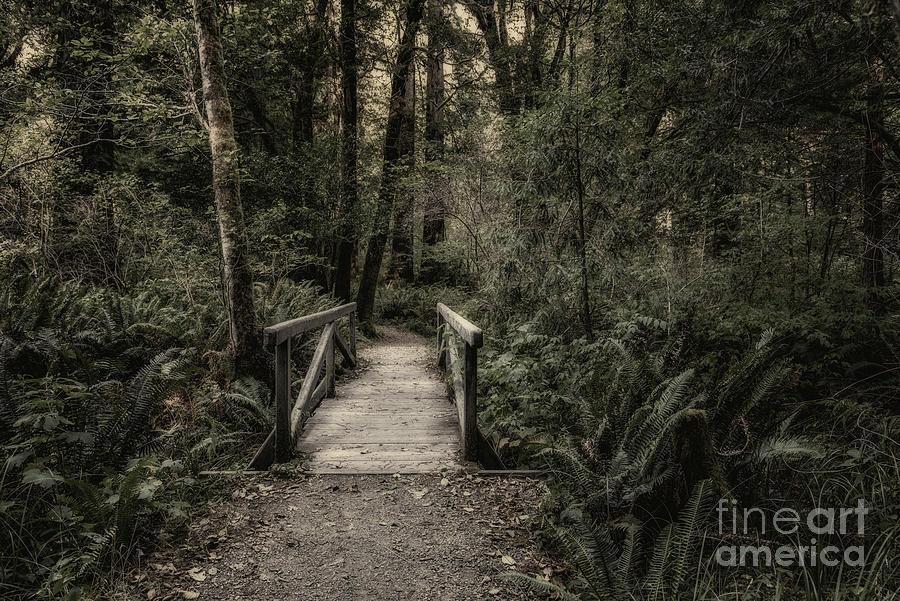 Bridge On Leiffer Trail 2 Toned Photograph