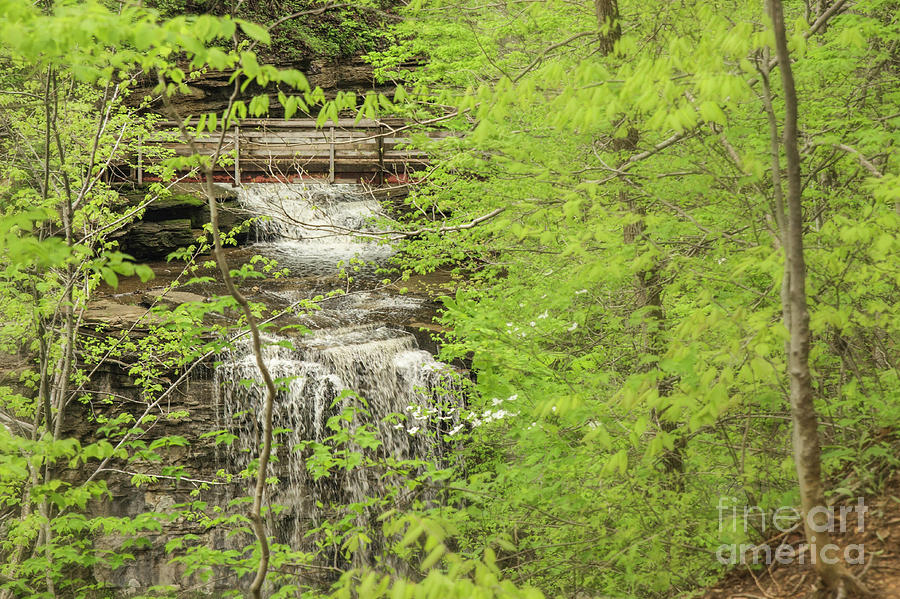 Waterfall Photograph - Bridge Over Little Clifty Falls by Nikki Vig
