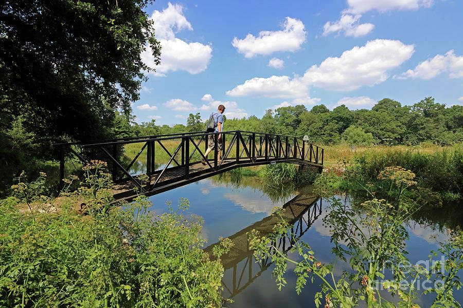 Bridge over The Wey Canal Surrey by Julia Gavin