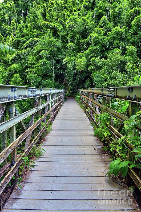 Bridge Photograph - Bridge To Bamboo Forest by Eddie Yerkish