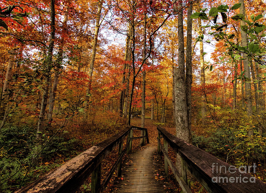 Bridge to Enchantment by Barbara Bowen