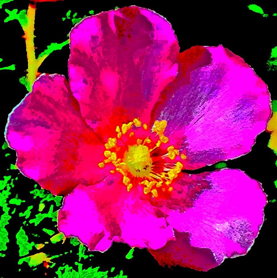 Bright Baja Rose Photograph