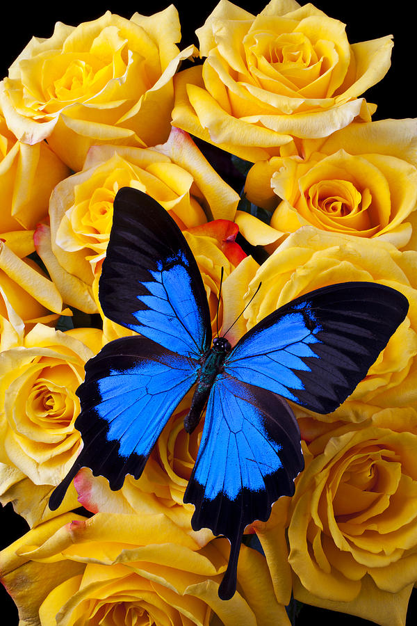 Bright Blue Butterfly Photograph By Garry Gay