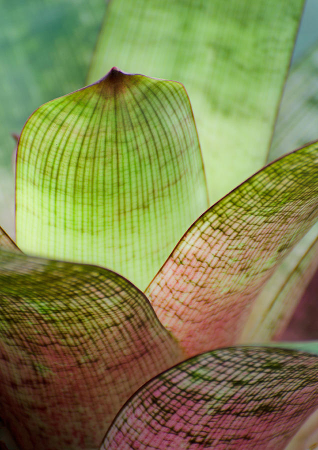 Bright Bromeliads by Jean Booth