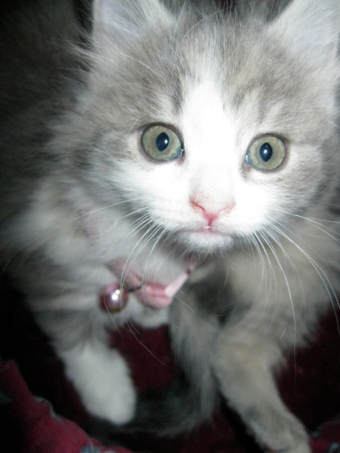 Kitten Photograph - Bright Eyes by Rebecca Wood