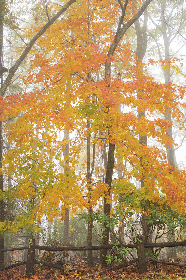 Bright Fall Photograph by Sallie Woodring