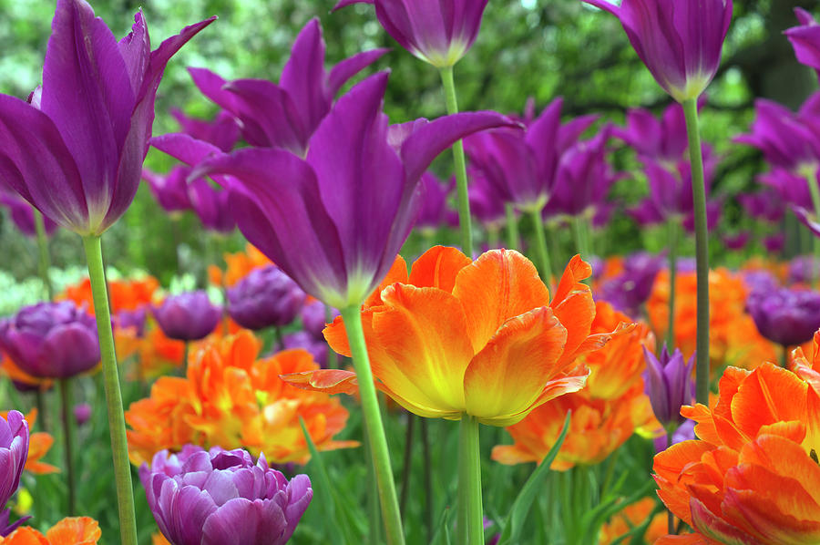 Flowers Photograph - Bright Floral by Christopher Muto