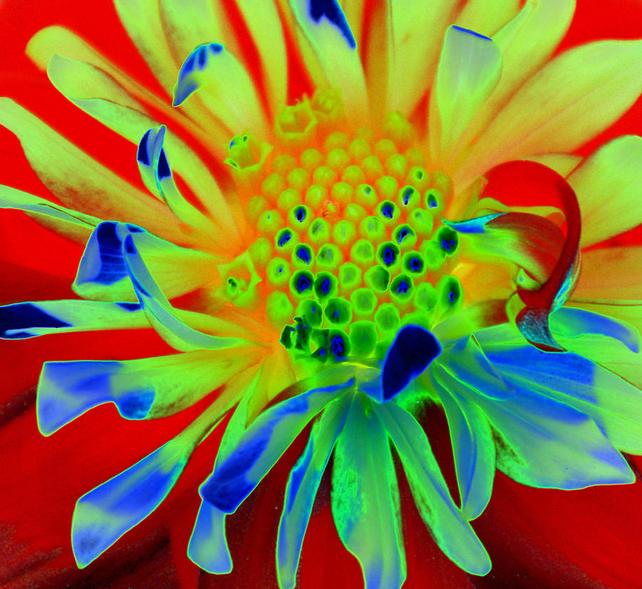 Diane Berry Painting - Bright Flower by Diane E Berry