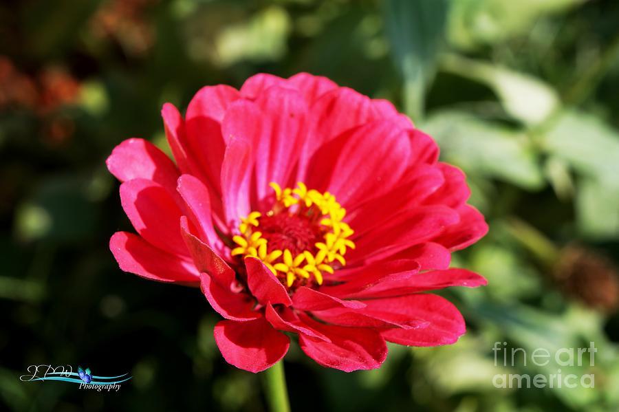 Bright Pink Summer Beauty Photograph
