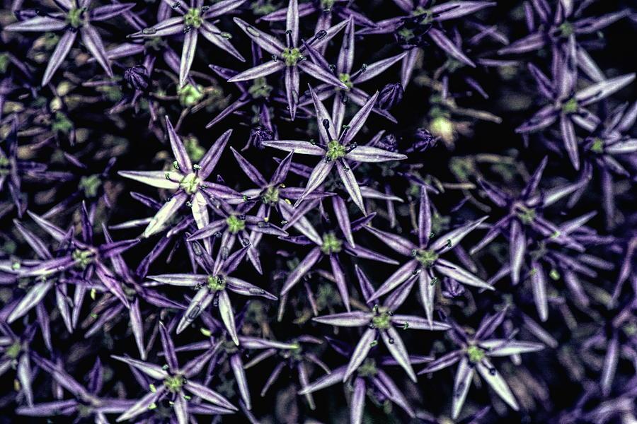 Bright Purples by Jackie Farnsworth