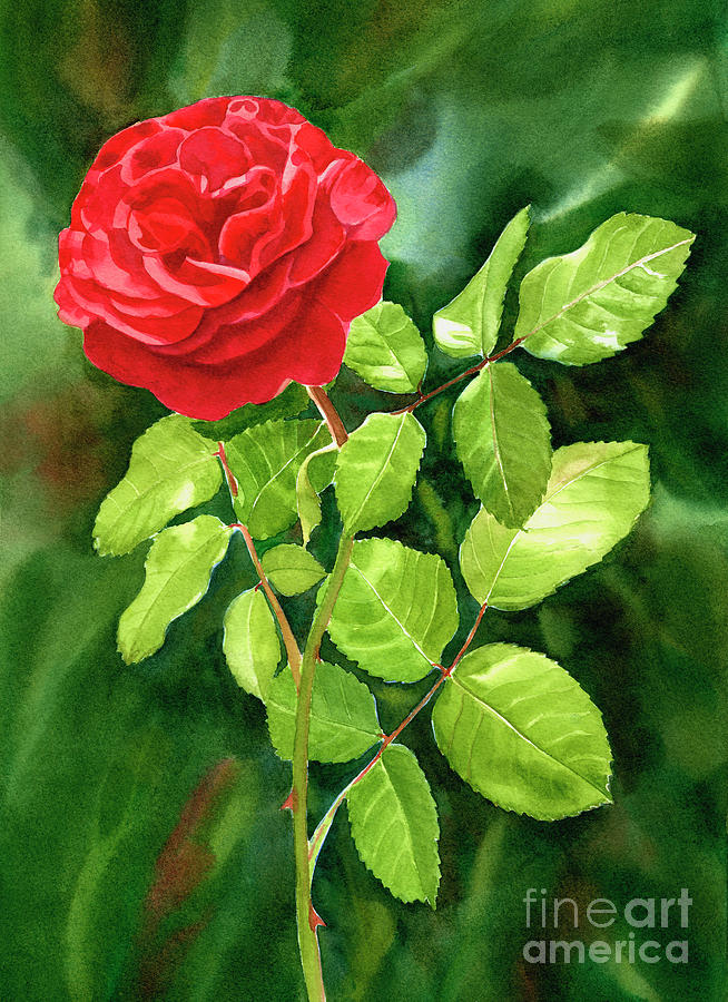 bright red rose with dark background painting by sharon freeman