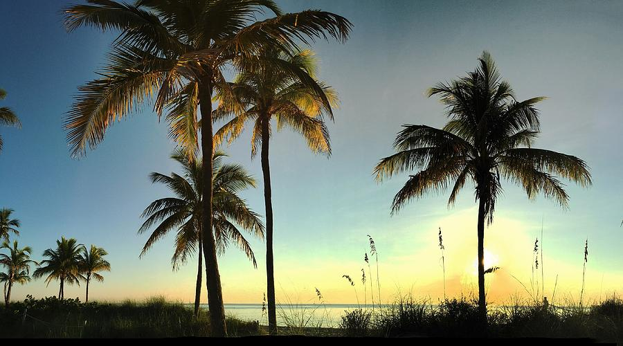 Palm Trees Photograph - Bright Sunshine Greets The Palms by Andrew Royston